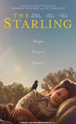 The Starling -Seyret